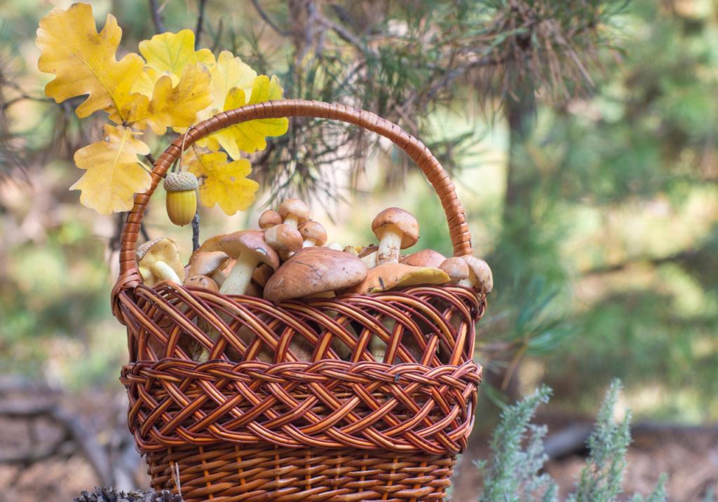 Unione Valle Savio e raccolta funghi: pubblicate le informazioni relative al 2021
